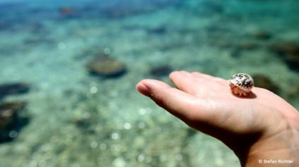 Die Krabbe haben wir wieder freigelassen.