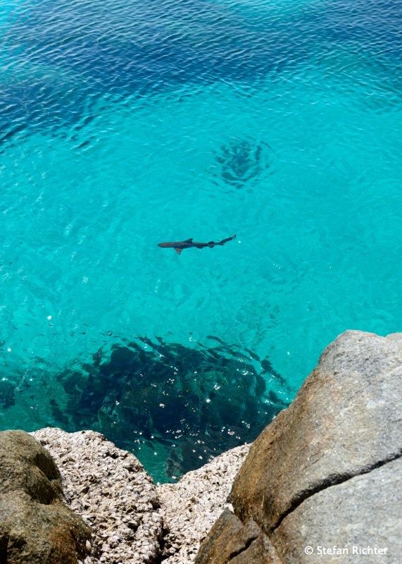 Das Hai-Bild des Tages. In diesem Fall fällt das Copyright auf Julia Richter :-)