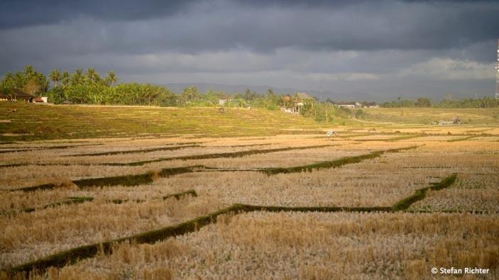Diese Reisfelder sind bereits abgeerntet und liegen trocken.