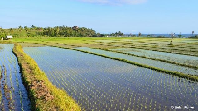Ausflug in die Reisterrassen von Bali.