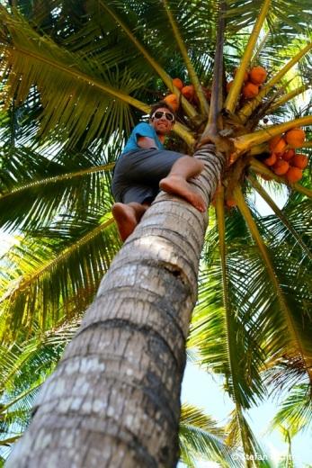 Action - Stefan auf der Palme.