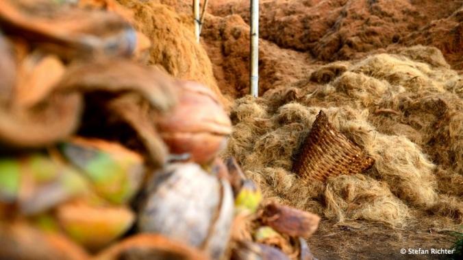 Kokosfasern für den deutschen Hintern. Diese Kokusnüsse werden für die Füllung von Autositzen verwendet.