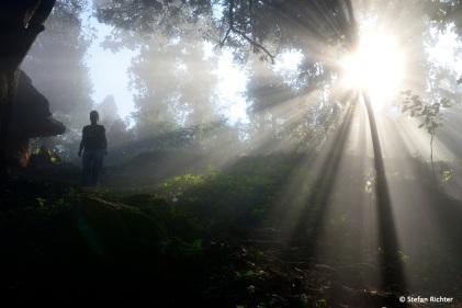 Waldspaziergang.