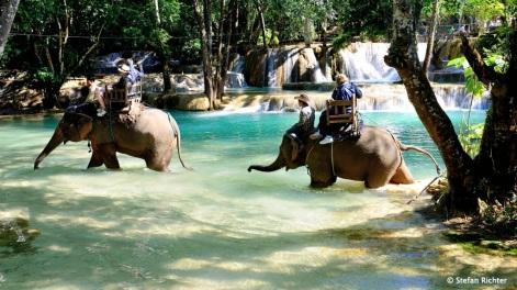 5 min Elefantenreiten gefällig?
