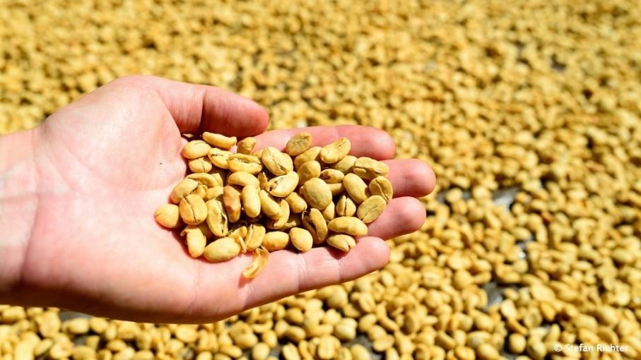 Anschließend werden die Bohnen ca. 2 Wochen getrocknet.