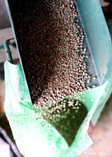 Bevor die Bohnen nach Größe und Qualität sortiert werden, werden die noch geschält und von Unreinheiten befreit.