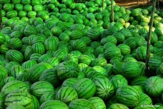 Melonensammlung in Pakse.
