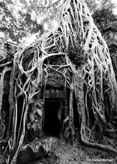 Die Baumwurzeln haben inzwischen die Macht über den Tempel.