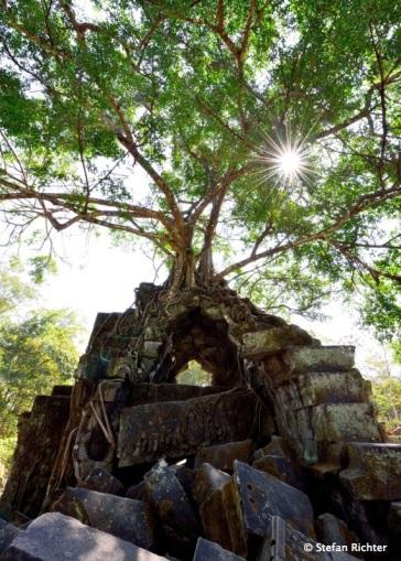 Ein Baum wächst auf dem Turm von Bang Mealea.