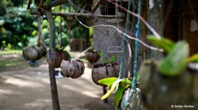 Kokosnussgarten.