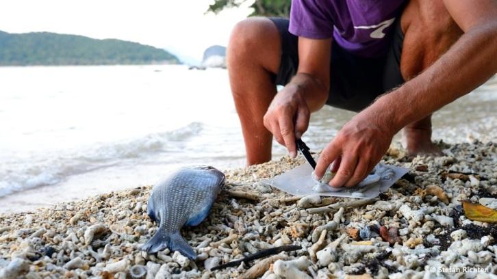 Stefan bereitet unseren günstig erstandenen Squid und Fisch zu.
