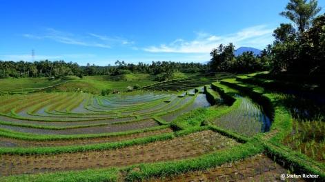 Man muß auf Bali nicht weit herumfahren, um Reisterrassen zu sehen.