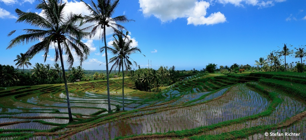 Ein komplexes Bewässerungssystem sorgt dafür, dass das Wasser aus den Bergen von einer Reisterrasse zur nächsten geleitet wird.