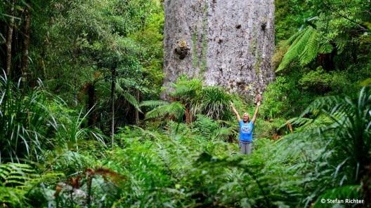 Tane Mahuta: 51 m hoch, 13,8 m in Umfang und 244,5 m^3 Holzmasse.