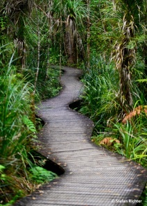 Waipoura Kauri Forest.