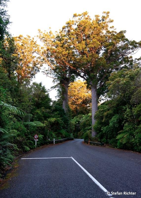 Kauri Road.