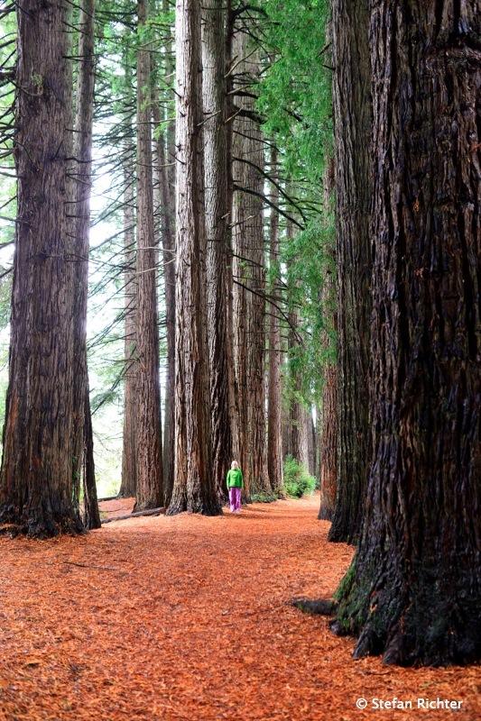 Ein Mädchen steht im Walde...