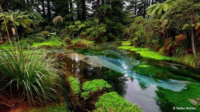 Hamurana Springs @ Lake Rotorua.