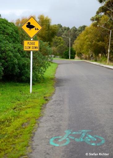 Achtung Radfahrer. Enten im Anmarsch.