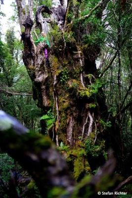 Taranaki Region. Es geht nach Oben.