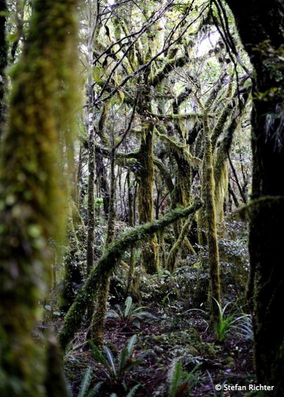 Waldansichten.