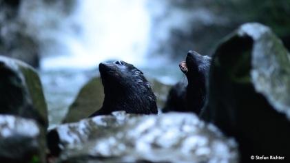 Robbenparty am Wasserfall.