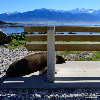Mittagspause in Kaikoura.