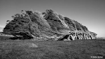 Vom Wind gezeichnet. Die Bäume am Slope Point.