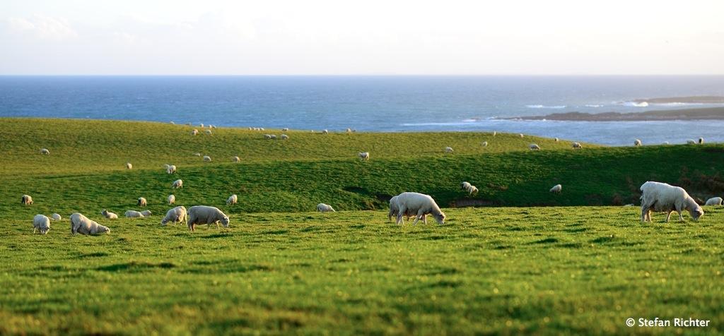 Fazit Stefan: Neuseeland ist eine große grüne Wiese mit Schafen drauf.