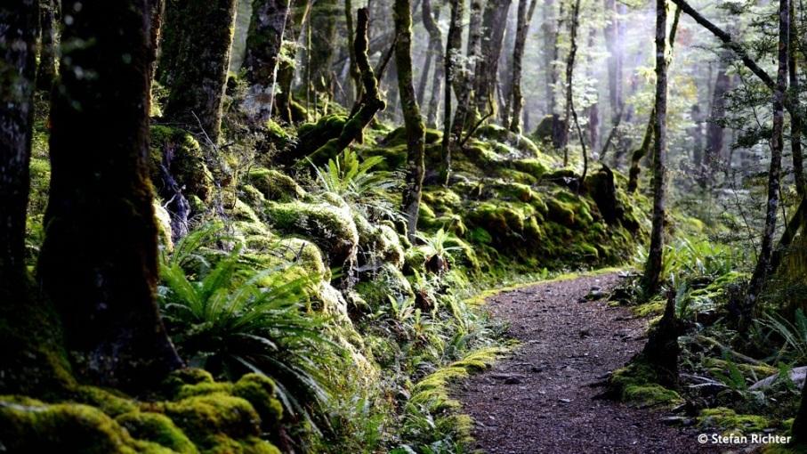 Durch den Wald führt der Weg am See entlang.