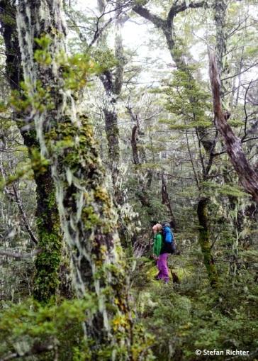 Dann geht's bergauf und der Wald verändert sich mit der Höhe.