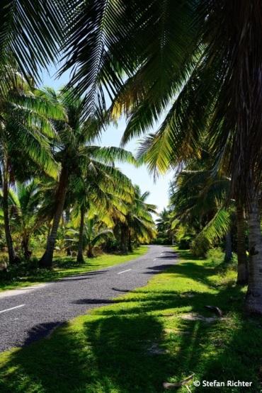 Palmen links und rechts. Wir haben noch nie so viele Palmen auf einer Insel gesehen wie auf Aitutaki.