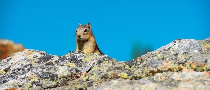 Squirrels - unsere ständigen Begleiter.