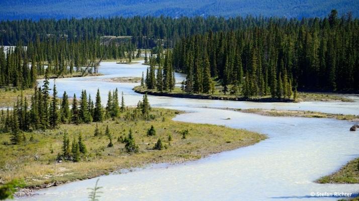 Athabasca River @ Jasper.