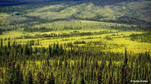 Weite Wälder und Tundra bestimmen das Landschaftsbild.