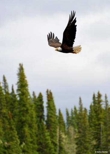 Adler sind hier ab und zu anzutreffen.