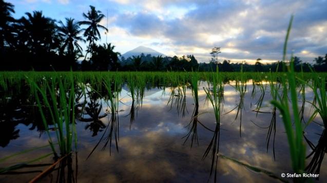 Sunrise @ Bali.