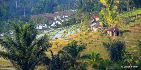 Arbeiten und Wohnen am Reis.
