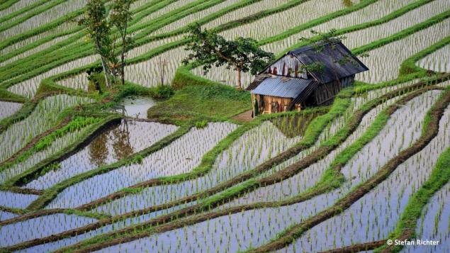 Ausflug in die Reisterrassen.