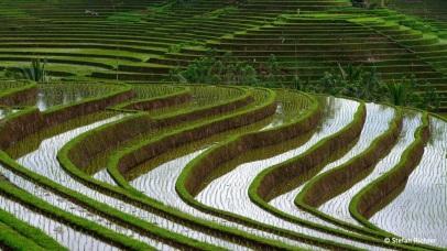 Symmetrisch ziehen sich die Stufen an den Hügeln entlang.
