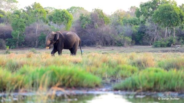 Good Morning Mr. Elephant.