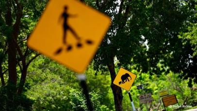 Elefanten-Fußgänger-Überweg.