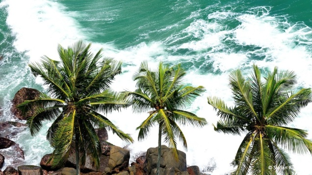 Palmen im Meer.