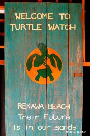 In der Nacht kommen die Schildkröten und legen ihre Eier am Strand von Rekawa ab. Auch wir konnten eine Green Turtle dabei beobachten.