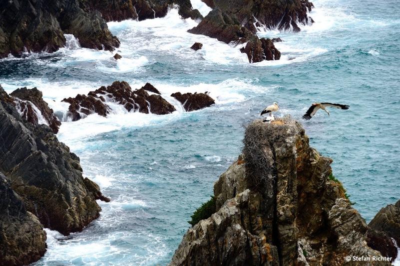 Störche suchen sich in Portugal sehr spezielle Wohnplätze.