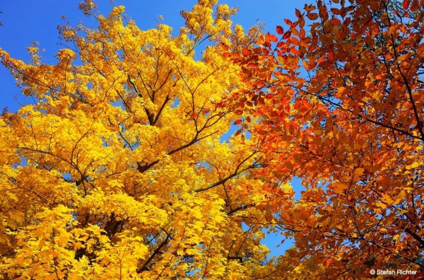 Kopf hoch und bunte Blätter zählen.