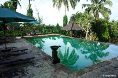 Dschungel-Pool.