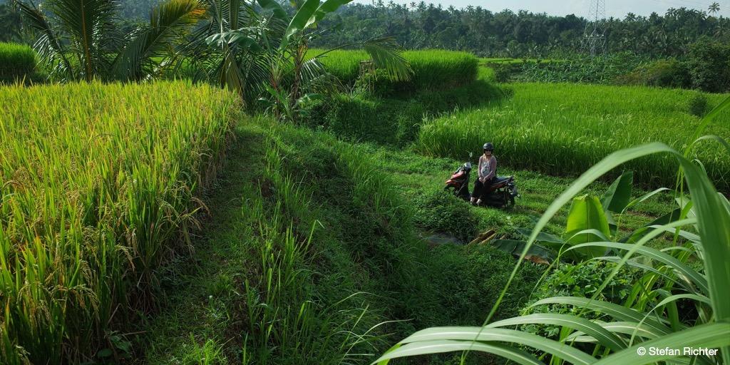 Ausflug in die Reisfelder.
