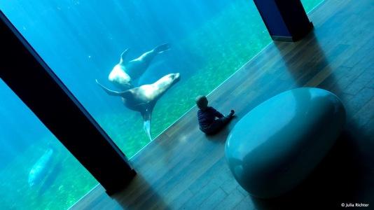 Finn im Aquarium.