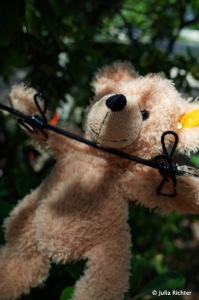 Waschtag für den Teddy.